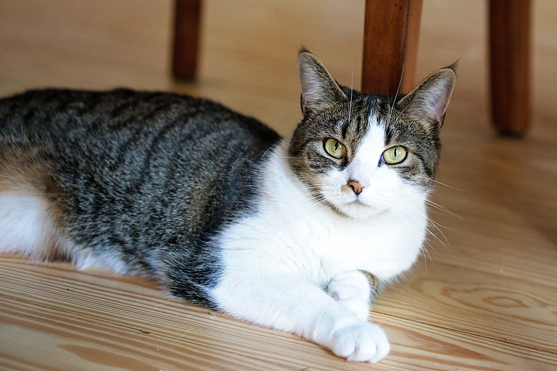 You May Be Wondering Why Do Cats Scratch Furniture? Cats Are Territorial By  Nature And Like To Feel In Control Of Their Territory.
