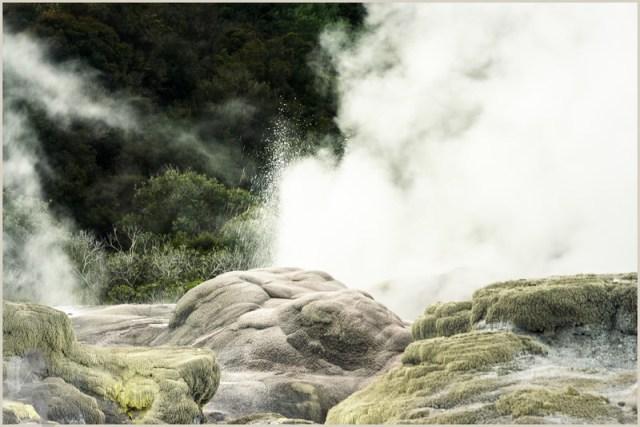 Pohutu Geyser in Te Puia - single border