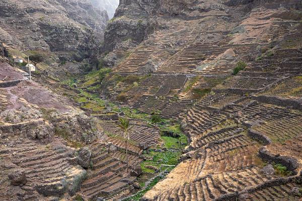 Verical farming