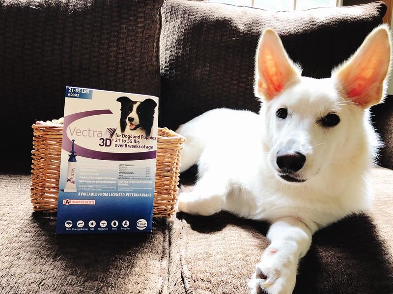 Dog Flea and Tick Control