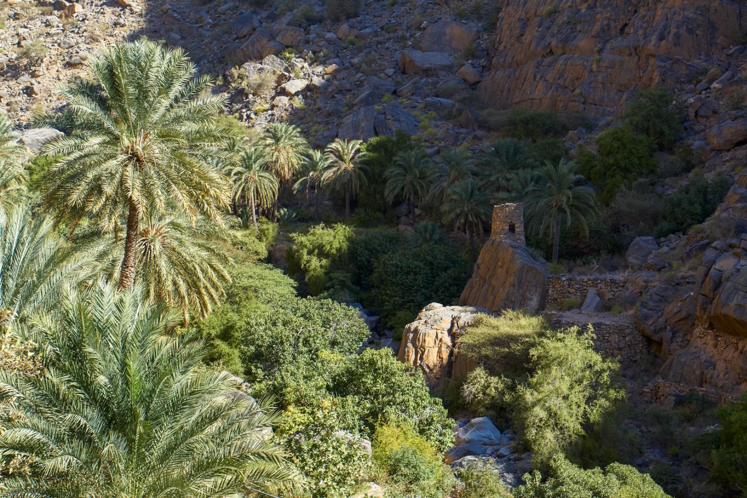 Watchtower in oasis