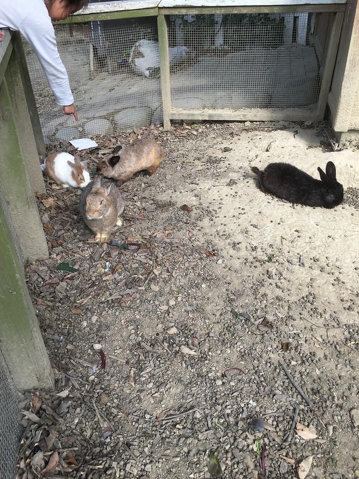 Feeding Rabbits at Flying Cow Ranch