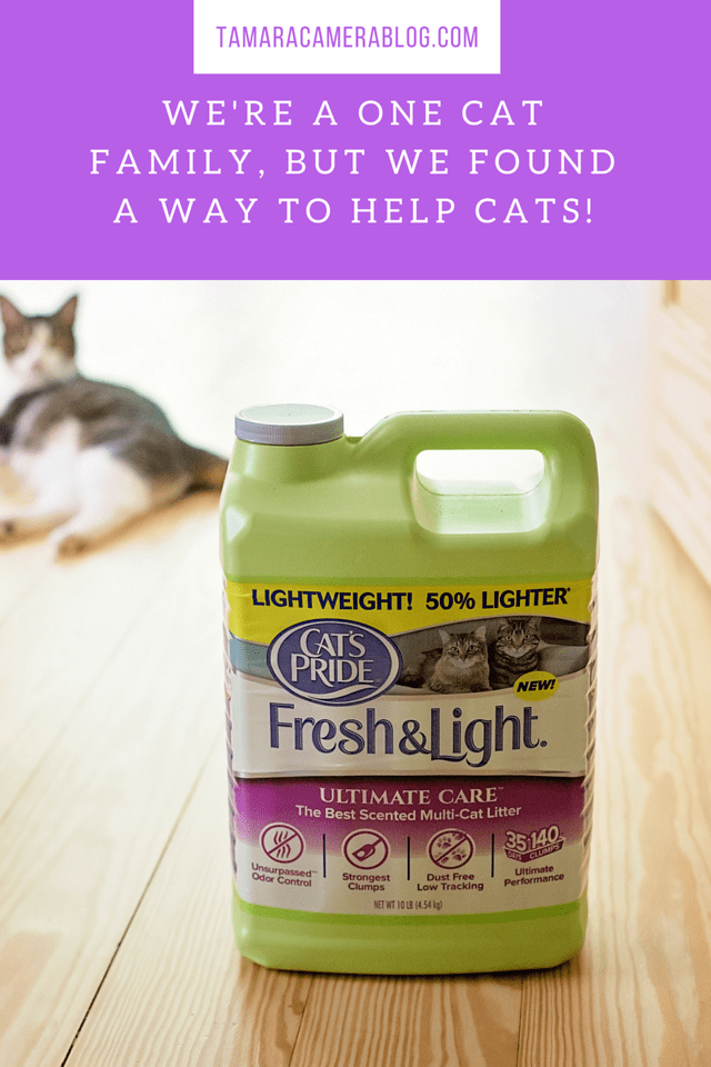 We're a One Cat Family, But We Found a Way to Help Cats! Find out how I'm helping millions of cats, simply by buying #CatsPride litter for Juniper! #ad #LitterForGood