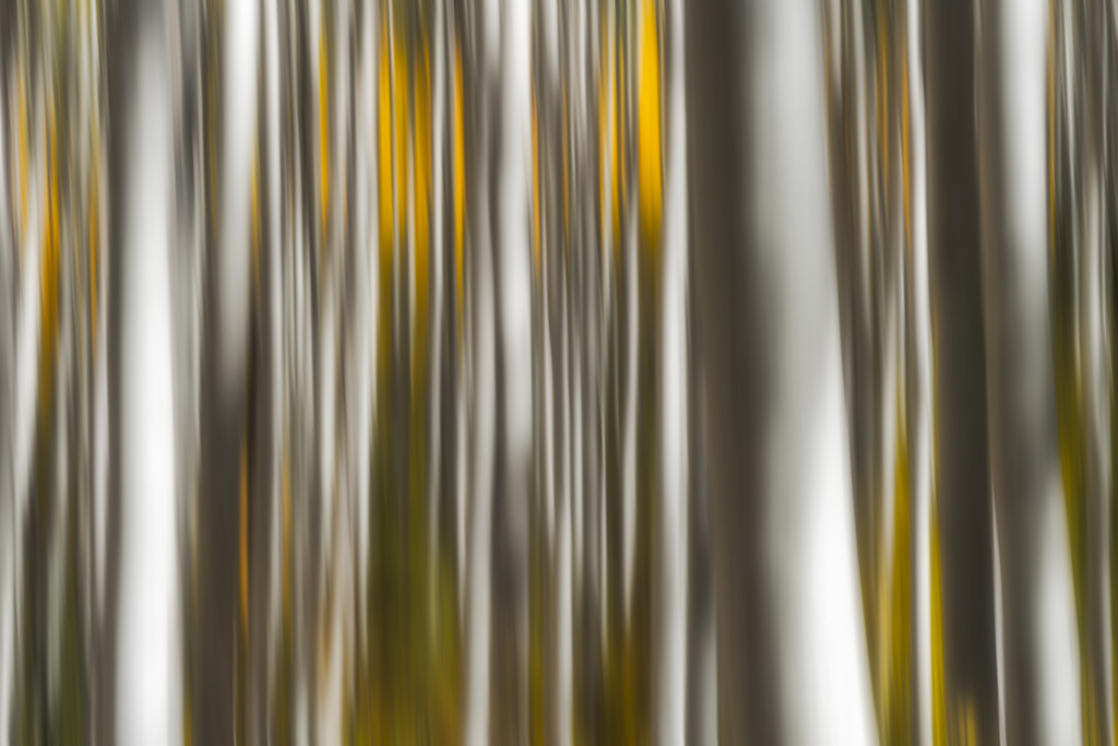 Blurred Aspens Beaver Creek