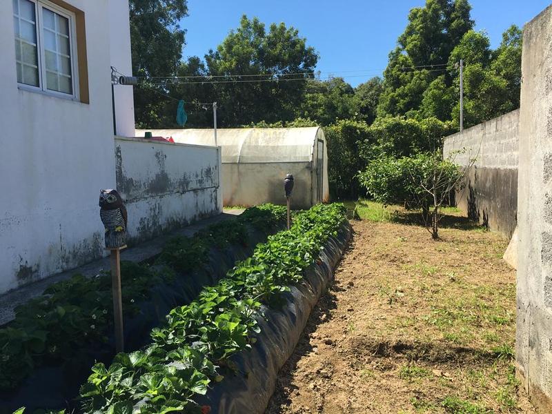 Back Garden behind Apartments