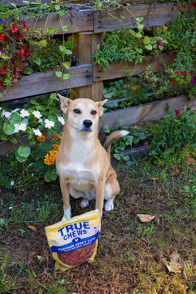 My dog Athena has become an integral part of my life's journey. Find out how we got her from a rescue in AL and what we do together every day #ad #TrueChews