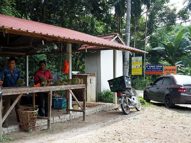 durian hutan