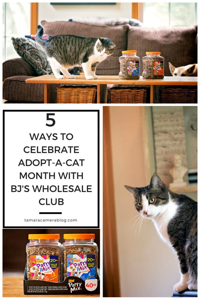 BJ's Wholesale Club is a one-stop shopping destination to give pets the very best! Here's how they help us celebrate Adopt-a-Cat Month! #ad #BJsSmartSaver