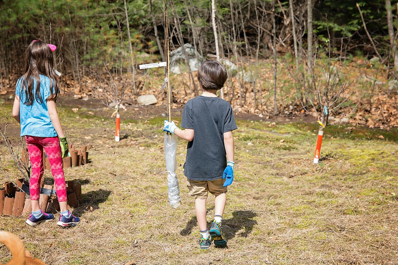 Our tree planting adventure with the Arbor Day Foundation is a wonderful family activity - from selecting a tree from #ArborDayTreeNursery