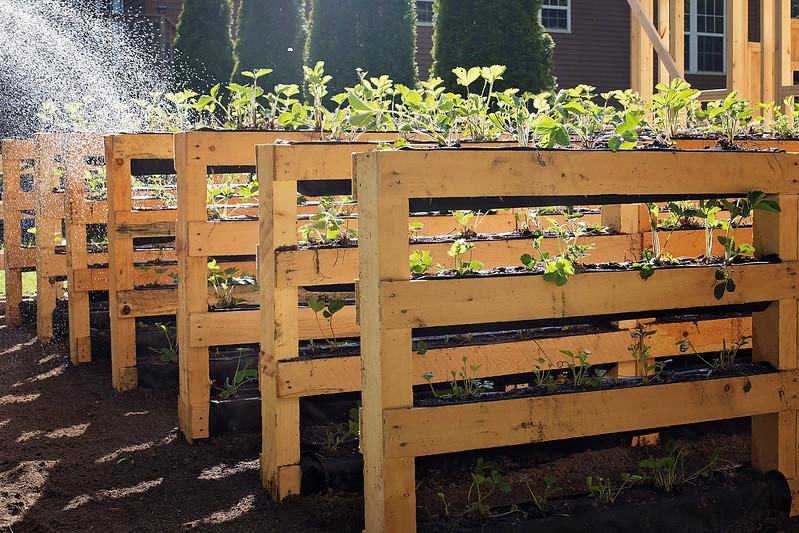 genius gardening technique