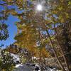 Aspen Grove by Virginia Lake
