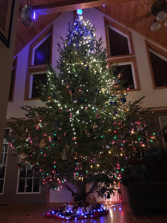 For Finish the Sentence Friday (#FTSF), we discover all of the ways in which we went and got the biggest Christmas tree of our lives! No turning back now!!