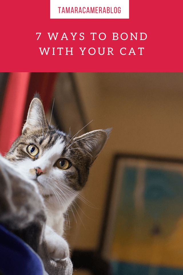 Do you know that you can bond with your cat? When I found this out, it changed my relationship with my adorable cat. Here are 7 tips to bond with your cat!