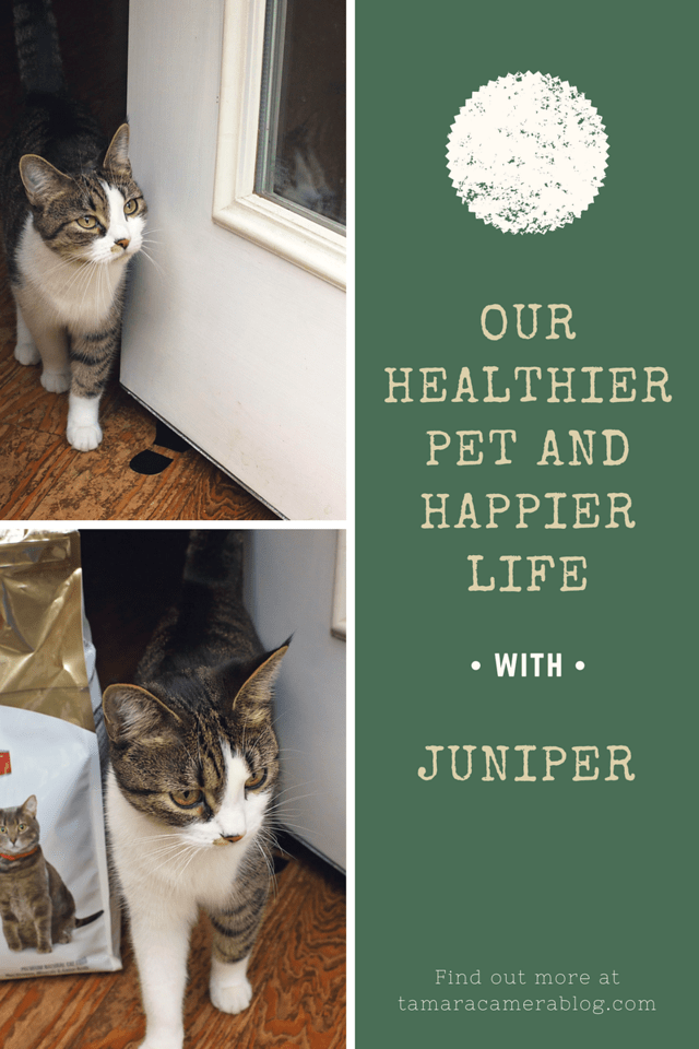 Find out the important role that nutrition plays in the health and wellness of your pet. And, check out this rebate and giveaway #ad #HillsTransformingLives