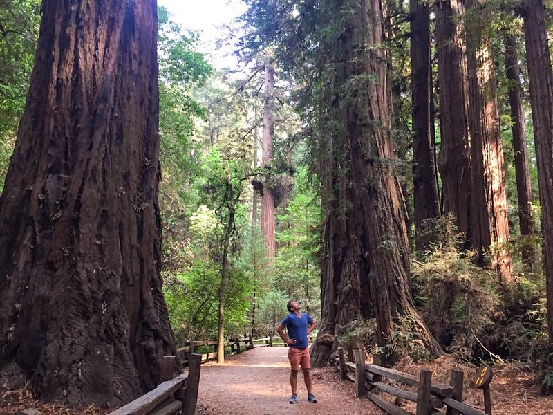 California road trip - Redwood forest