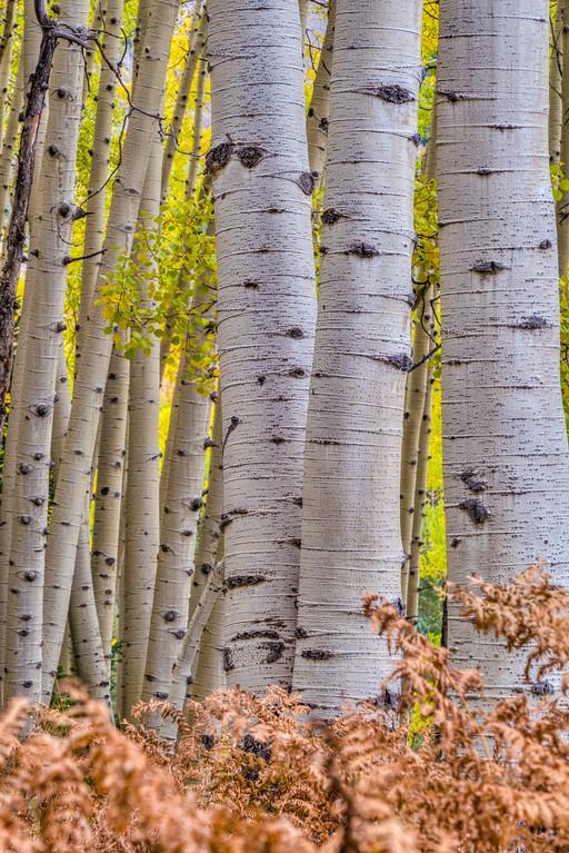 Colorado Fall Foliage Ohio Pass Gunnison