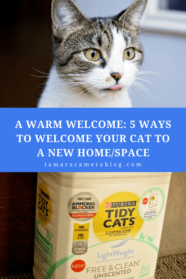Our cat has a pretty amazing life, and we made a commitment to keep it that way for her. Whether you're bringing home a new cat, moving to a new home, or renovating a home nearly unrecognizably (or not) here are 5 tips to make your cat feel welcome in the home home or space. #ad #TidyTreatment