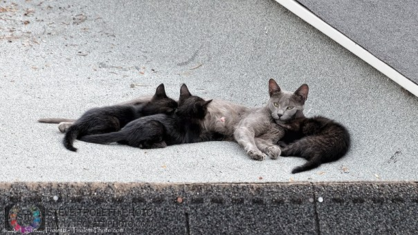Abandoned Female Cat and her litter of 3 kittens - by Steve Troletti