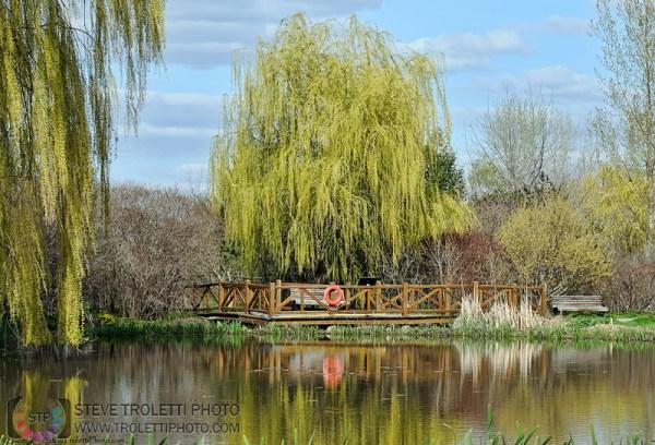 Steve Troletti Photography: PICTURE OF THE DAY / PHOTO DU JOUR &emdash; L��tang de la Maison de l'arbre
