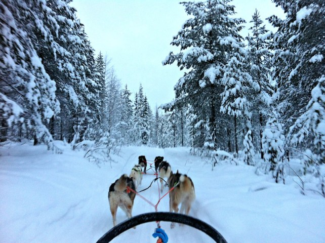 travel without quitting your job - dog sledding in the Finnish Lapland