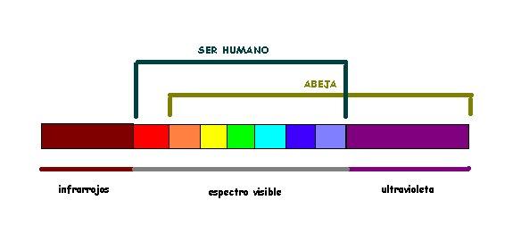 https://i1.wp.com/photos1.blogger.com/blogger/1148/2373/1600/espectro%20visible.jpg