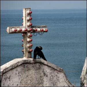 kissing crows, suutelevat varikset