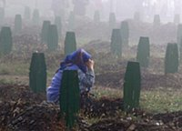 Srebrenica Massacre (7/11 1995) - Srebrenica mother cries on her sons' graveyard