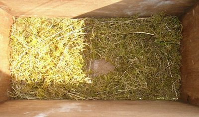 Nest in the postbox