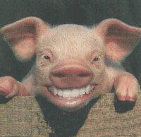 https://i1.wp.com/photos1.blogger.com/blogger/5408/2292/320/Pig_Allah.jpg