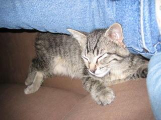 Fiona napping