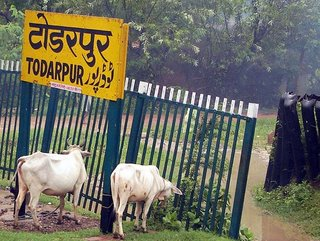 Cows at the Station