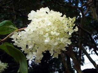 Lady Hyderi Park - A flowery affair