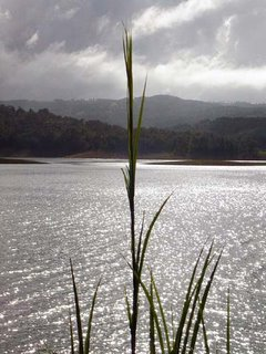 Lake Side Grass