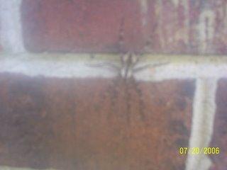 Our Spider Friend