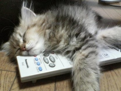 Image result for cats and tv
