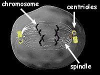 Afbeeldingsresultaat voor spoellichaam