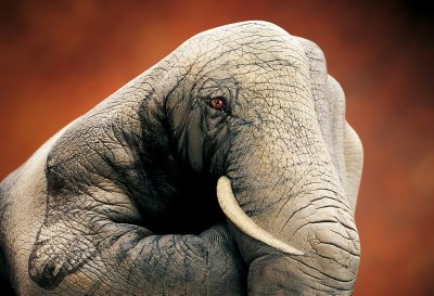 Elephant - Guido Daniele