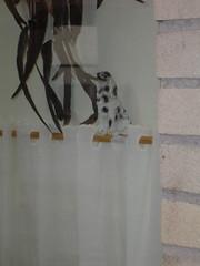 hond voor het raam1