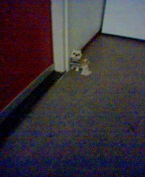 hondjesvoordeur