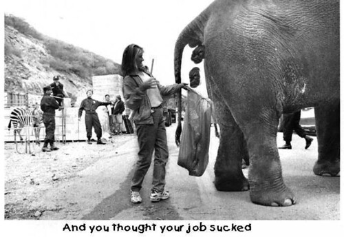 elephant dropping catcher