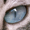 olho mia