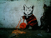 banksy kitten