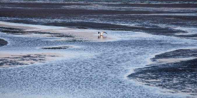 Seagull-at-Low-Tide