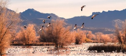 Sunset-Grey-Lodge-Snow-Geese-cp