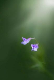Tiny-Ragle-Ranch-Flower