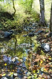 A Very Quiet Spot- Cascades Creek