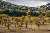 Fall Orchard, Oasis Calif.