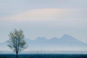 Morning-Fog-Colusa-Buttes