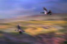 Night-Flight-Over-the-Bluffs