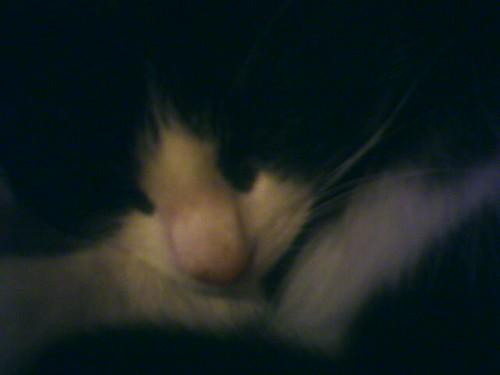 Sweeney sleeping